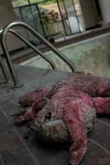 Some Bunny (Mimi Martini) Tags: house abandoned vancouver toy bc swimmingpool urbanexploration mansion stuffy