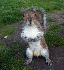 Wot, no nuts ? (Durley Beachbum) Tags: squirrel may bournemouth