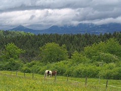 Mountain-View Hohenzollern (Paramedix) Tags: horses mountains nature germany deutschland natur olympus berge landschaft pferde badenwrttemberg schwbischealb mft em5
