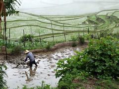YUANYANG (maigniez) Tags: china fog rice yuanyang