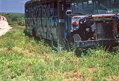 Graffiti Bus (Jupiter 9, 1954) (PositiveAboutNegatives) Tags: bus abandoned fuji 85mm rangefinder slidefilm velvia vintagecamera zeissikon derelict coolscan wrecked sonnar jupiter9 contaxii kiev2a vintagerangefinder nikon9000scanner lakeokeechobeearea freefilmimages freefilmpictures