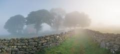 Veiled Approach (http://www.richardfoxphotography.com) Tags: mist misty fog wall bluebells barn farm foggy devon dartmoor drystonewall devonshire farmstead dartmoornationalpark dartmoorlandscape devonlandscape emsworthy emsworthybarn
