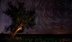 El inquilino 4 (jrandet) Tags: longexposure nightphotography espaa stars arbol huesca estrellas nocturna largaexposicion circumpolar fotografianocturna rastrodeestrellas jrandet
