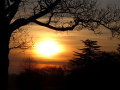 Winters Not All Bad (gorbygould) Tags: dawn golden treesilhouette earlymorning wintertrees goldenlight beautifulsky