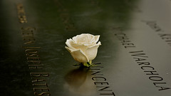Can You Hear Heaven Cry? (Anna Kwa) Tags: newyorkcity usa rose nikon tears heart soul latin d750 twintowers always wtc remembrance aeneid virgil 911memorial 2977 my afsnikkor70200mmf28gedvrii 911museum annakwa