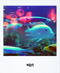 """#DailyPolaroid of 16-3-12 #169 • <a style=""""font-size:0.8em;"""" href=""""http://www.flickr.com/photos/47939785@N05/6855128738/"""" target=""""_blank"""">View on Flickr</a>"""