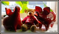 My little Teddy - Don't Panic (110) (Sidsel Oba) Tags: bear red brown cute norway fun toy toys norge photo funny colours foto teddy little fantasy teddybear st rd playful brun bjrn moro tnsberg bamse dontpanic leker leke farger liten gy morsom fantasi sidseloba