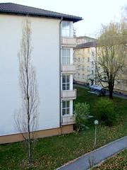 Herbst im Frühling - vor meinem Balkon (relibu) Tags: basel frühling quartier steineiche