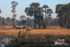 Landscape- Koh Ker.jpg