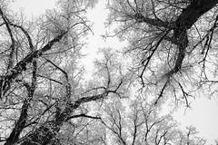 IMG_2014 (Christian Köstner) Tags: schnee trees winter sky white black cold tree nature forest hope blackwhite branch peace natur himmel center twig schwarzweiss kalt wald weiss bäume baum einsamkeit schwarz centered hoffnung weis ruhe vertikal
