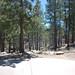Whitetail Campground #14
