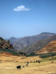 ethiopia landscape (mariusz kluzniak) Tags: africa blue portrait mountains yellow clouds landscape cows sony rocky east hills clear valley single land ethiopia alpha eastern 77 grazing slt a77 simien hilltops debark