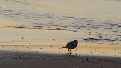 IMG_5440 (Martina Mastromonaco) Tags: beach vineyard martha s subset