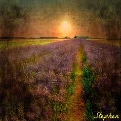 ~~ Textured Flowers ~~ (stephgum32807) Tags: flowers texture impressionist deepavali memoriesbook imageourtime agorathefineartgallery picmonkey