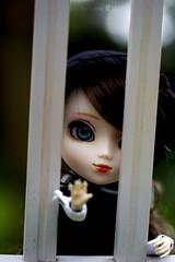 Luna Lawliet (Luna 愛良い) Tags: new brown green eye hair trapped eyes doll acrylic dolls stock luna curly wig groove pullip maid pullips lovegood obitsu lawliet stica obitsued