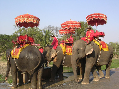 Thai Elephant Camp