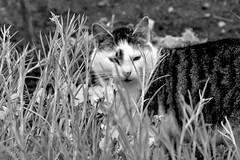 Hide (SoulOfARabbit) Tags: bw nature animals cat blackwhite nikon d3100 nikond3100