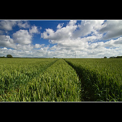 No Country for Old Men (sisyphus007) Tags: uk england field canon landscape reading corn wheat farmland 7d gb berkshire caversham mygearandme kiedyszko