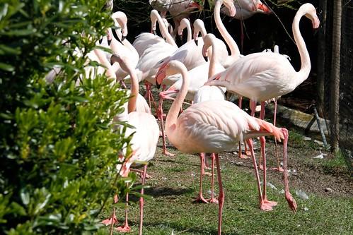 Zoo Lignano 2014 - 023