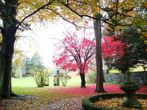 Shedding Autumn Tree