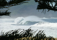 (enjbe) Tags: ocean blue tree pine wave australia spray avocabeach