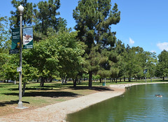 El Dorado Park Banners, by me (EButterfield Photography) Tags: park photography pond education photos banner ducks longbeach government educational identification banners birdwatching parksandrecreation eldoradoparkbanners ebutterfield ebutterfieldphotography