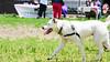 16-05-15_untitled_405 (Daniel.Lange) Tags: dog philadelphia dogs dogdayafternoon spado columbussquarepark