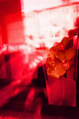 Abstract Orchids (Georgie_grrl) Tags: flowers friends toronto ontario abstract window reflections cool crossprocessed photographers social funky pentaxk1000 colourful rikenon12828mm velviaslidefilm torontophotowalks topwptbf