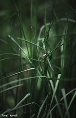 Shy bug (Anei Ionut Visuals) Tags: nature forest bug insects shy bugs