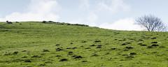 Mole City (warth man) Tags: wildlife molehills miners moles molecity nikon70300mmvr d7000