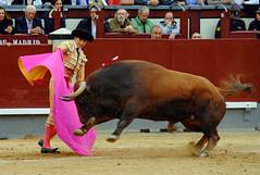 Roca Rey, Las Ventas, Madrid (Fotomondeo) Tags: madrid espaa spain bull bullfighter toros bullfight toro bullring matador torero sanisidro plazadetoros corridadetoros lasventas rocarey fujifilmxm1