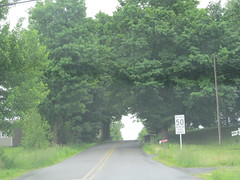 Tree tunnel (Quevillon) Tags: canada tree qubec brigham montrgie easterntownships bromemissisquoi