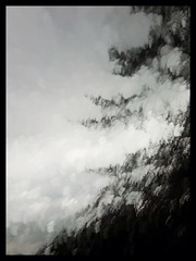 Today's Rain and a Tall Tree (Lul De Panbehchi  Photographist) Tags: painterly tree rain lluvia flora rbol iphone bleachbypass iphoneography slowshutterapp ringexcellence dblringexcellence