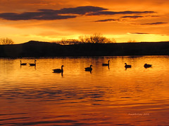 Silhouettes of Dawn (RootsRunDeep) Tags: sky orange cloud lake water silhouette sunrise geese pond