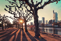 (ill-padrino www.matthiashaker.com) Tags: trees sunset sun tower skyscraper river am shadows frankfurt main promenade highrise ufer bume schatten commerzbank gegenlicht