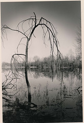 Framing (TaraRaePhotography) Tags: white black west reflection tree film photography student lafayette surreal indiana creepy purdue bog celery