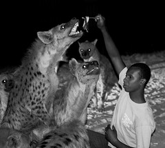 hyena. Harar. Ethiopia (courregesg) Tags: africa people traditional omovalley ethiopia tribe ethnic afrique ethnology tribu omo