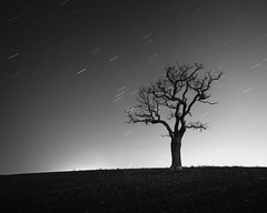 Light rain (.Rohan) Tags: uk england blackandwhite bw tree blancoynegro monochrome field print landscape photography fineart norfolk photograph faming startrails photorag rohanreilly longexpsourepier