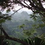 """BIO 245: Ecology of Ecuador<a href=""""http://farm8.static.flickr.com/7237/6996068134_64c546f015_o.jpg"""" title=""""High res"""">∝</a>"""
