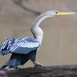 """BIO 245: Ecology of Ecuador<a href=""""http://farm8.static.flickr.com/7237/6996076088_951887448a_o.jpg"""" title=""""High res"""">∝</a>"""