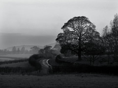 On a misty morn. (paul downing) Tags: blackandwhite bw tree misty canon mono countryside greatayton pdp stokesley pd1001 sx10is pauldowning