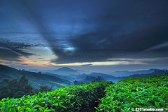 Sg Palas Tea Plantation (HDR) (2121studio) Tags: cameronhighlands sgpalasteaplantation