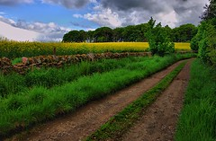 Rural Country Road  - Fine Nature Scene - Tayside Scotland (Magdalen Green Photography) Tags: trees green yellow scotland fields tayside tranquil greentrees coolgreen 8734 ruralview ruralcountryroad iaingordon finenaturescene magdalengreenphotography