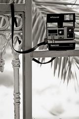 Polaroid (Mohammed Almuzaini © محمد المزيني) Tags: camera new bw white black canon lens polaroid eos nice nikon flickr you explore mohammed محمد عبدالله فلكر فليكر قديم اسود كام كانون ابيض مصور المزيني فوتوغرافي نايكون احادي اكسبلور almuzaini mo7amd almozaini