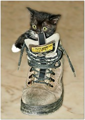 Kitten in the boot  =^..^= (Viola & Cats =^..^=) Tags: cats animals boots kittens kitties felini felines gatti animali gattini stivali mygearandme mygearandmepremium mygearandmebronze mygearandmesilver mygearandmegold