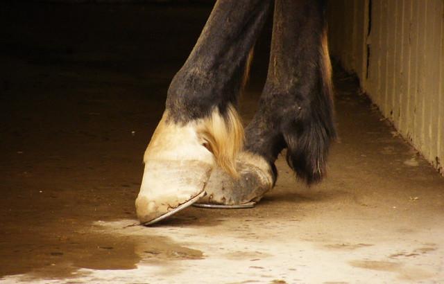 casco de caballo