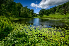 Stourhead Lake 1 - abstract (-- Roger Nichol) Tags: lake water landscape countryside stourhead wiltshire nationaltrust sigma1020mm oilpaintingfilter sonya77
