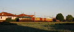 Al sorgere dei container (paolo e186908 ARANCIO) Tags: t cargo container tc ti fs msc trenitalia dgol caimano milanovenezia e655 e655494 lodetto