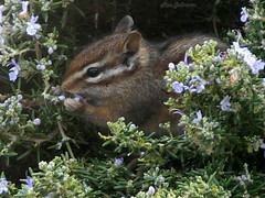 P1000302 w1024 (rjccski) Tags: nature animal lumix critter panasonic dmcfz30