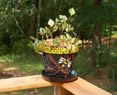 Bumble Bee Pot (beaded glass) Tags: mosaic bee bumblebee claypot flowerpot